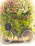 Bicicleta con la pared verde de la flor en fondo Fotos de archivo libres de regalías