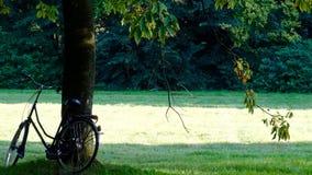Bicicleta contra un árbol Foto de archivo