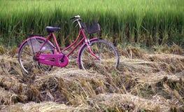 Bicicleta cor-de-rosa em um campo de almofada imagens de stock royalty free