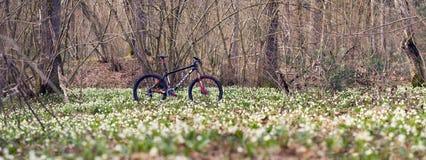 Bicicleta de la montaña del carbono entre las flores Imagenes de archivo