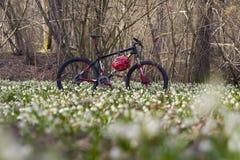 Bicicleta de la montaña del carbono entre las flores Fotografía de archivo