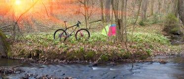Bicicleta de la montaña del carbono entre las flores Foto de archivo