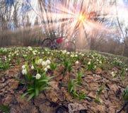 Bicicleta de las primaveras y del carbono fotos de archivo