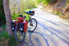 Bicicleta de MTB que viaja a la bici en un bosque del pino Imagen de archivo libre de regalías