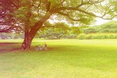 Bicicleta debajo del árbol grande fotografía de archivo