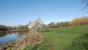 Bicicleta del montar a caballo del hombre a través del parque el día soleado de la primavera Hierba verde, opinión del río almacen de metraje de vídeo