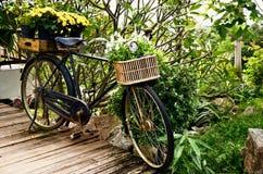 Bicicleta del vintage con la flor en cesta Foto de archivo