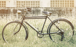 A bicicleta do vintage no jardim coloca com filtro do vintage imagens de stock