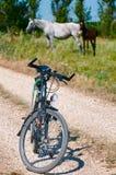Bicicleta e cavalos Fotografia de Stock Royalty Free