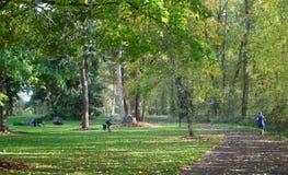 Bicicleta e corredor no parque Fotografia de Stock Royalty Free