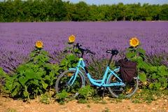 Bicicleta eléctrica en el campo de la lavanda en Provence Foto de archivo libre de regalías