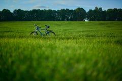 Bicicleta en campo de hierba por la mañana Imagen de archivo