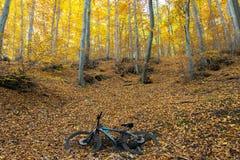Bicicleta en el bosque Fotos de archivo