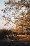 Bicicleta en el jardín Bicicleta vieja en hierba verde Bici de montaña Imagenes de archivo