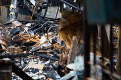 Bicicleta en la ciudad después del fuego y quemada Fotos de archivo