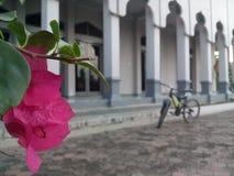 Bicicleta en la mezquita Fotos de archivo libres de regalías