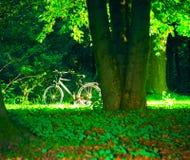 Bicicleta en parque Imagen de archivo libre de regalías