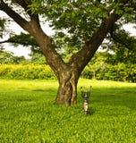 Bicicleta en un parque bajo el árbol. Fotografía de archivo libre de regalías