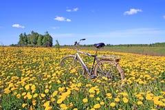 Bicicleta entre el diente de león Imagen de archivo libre de regalías