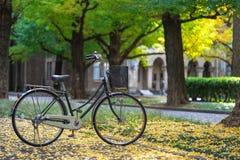 Bicicleta estacionada no parque, entre os campos da ?rvore da nogueira-do-Jap?o O Bam est? completo dos jardins Bonito para relax foto de stock