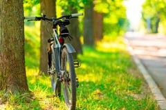 Bicicleta estacionada perto de uma árvore Imagem de Stock