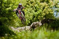 Bicicleta Forest Downhill de Mountainbiker fotografia de stock