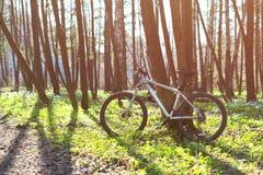 Bicicleta na floresta da mola Foto de Stock
