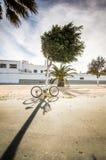 Bicicleta que se inclina contra un árbol Foto de archivo libre de regalías