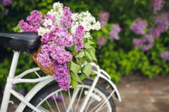 Bicicleta retra blanca con la cesta de flores Imagen de archivo