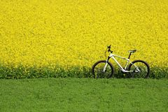 Bicicleta só Imagem de Stock