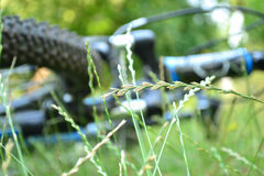 Bicicleta Unfocused na grama Imagem de Stock
