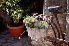 Bicicleta velha isolada com plantas e flores na cesta Foto de Stock