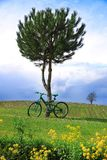 Bicicleta verde en campo Fotografía de archivo libre de regalías