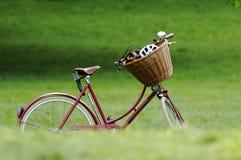 Bicicleta vermelha Foto de Stock Royalty Free