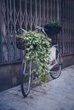 Bicicleta vieja apoyada en la pared con la cesta de flores Foto de archivo libre de regalías