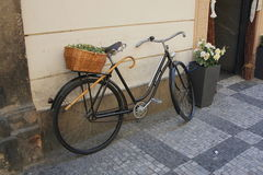 Bicicleta vieja con la cesta de mimbre Imagen de archivo libre de regalías