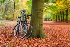 Bicicletas contra árbol en bosque del otoño Foto de archivo