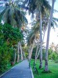 Bicicletas en la avenida de palmeras Foto de archivo