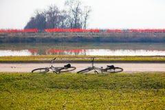 Bicicletas estacionadas ao longo do rio Imagem de Stock