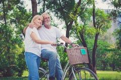 Bicicletas sênior da equitação dos pares no parque imagens de stock