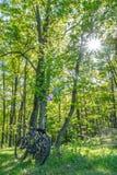 Bicicletas y hamaca en el medio del bosque Fotos de archivo