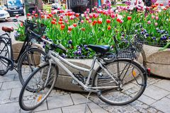 Bicicletas y macizo de flores de la calle con las flores florecientes en Munich Alemania foto de archivo