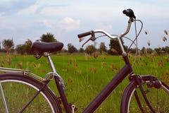 Bicicletta d'annata sul prato verde Immagine Stock