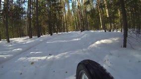 Bicicletta di guida del ciclista, inverno estremo che cicla nella foresta sulla bici del paese trasversale video d archivio