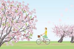Bicicletta di guida della donna nella natura di primavera illustrazione di stock