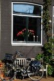 Bicicletta e tulipani Immagine Stock Libera da Diritti