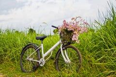 Bicicletta nel giacimento del riso Fotografia Stock Libera da Diritti