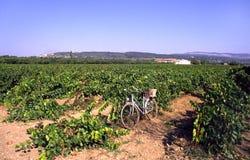 Bicicletta nella vigna Immagini Stock Libere da Diritti