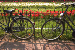 Biciclette e tulipani di Amsterdam Immagine Stock Libera da Diritti