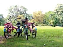 Biciclette parcheggiate su prato inglese Immagini Stock